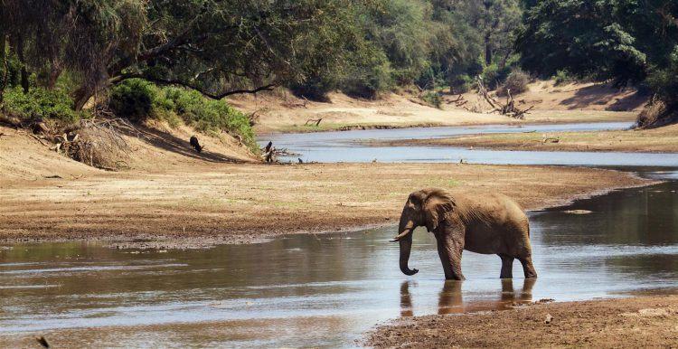 Elefant an einem Fluss im Krüger Nationalpark