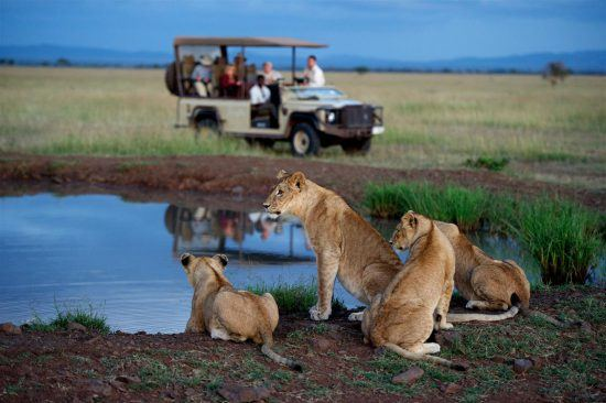 Lions at a waterhole at Singita Serengeti Lodge Kruger Park
