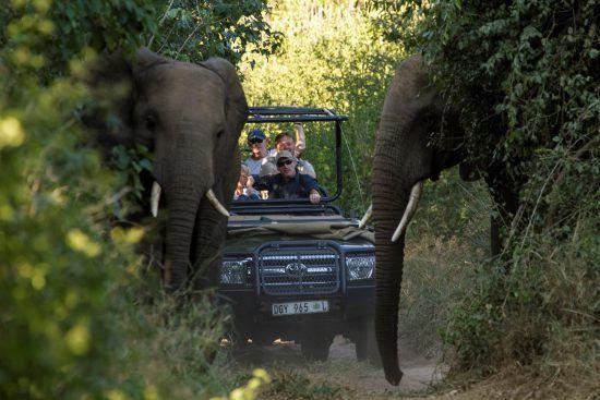 Tu vehículo de safari te está esperando.