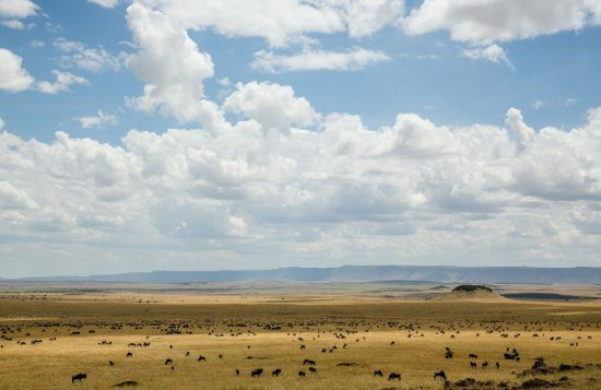 Serengeti plains in Tanzania dotted with wildebeest