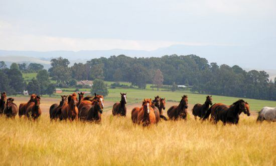 Horses at Hartford House in South Africa