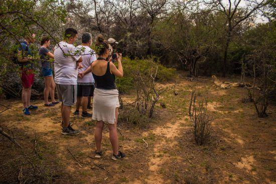 Seeing cheetah on walking safari at Samara Private Game Reserve