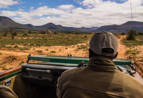 on a safari game drive at Samara Game Reserve