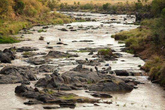 Dead wildebeest from a Mara River Crossing during a Great Migration safari in the Mara Triangle in Kenya