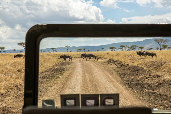 Trailing the Great Wildebeest Migration in the Serengeti