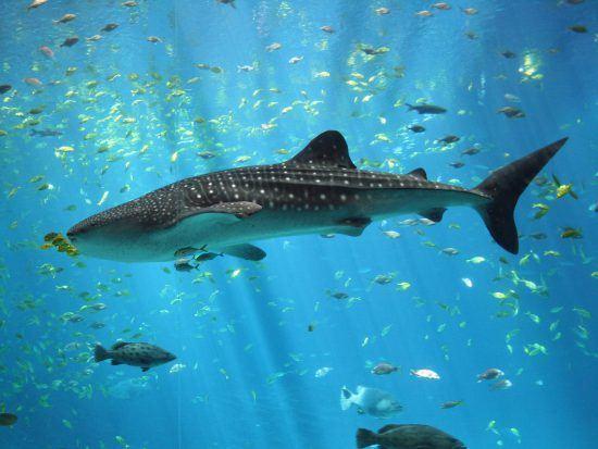 Que faire à Cape Town ? | Two Oceans Aquarium
