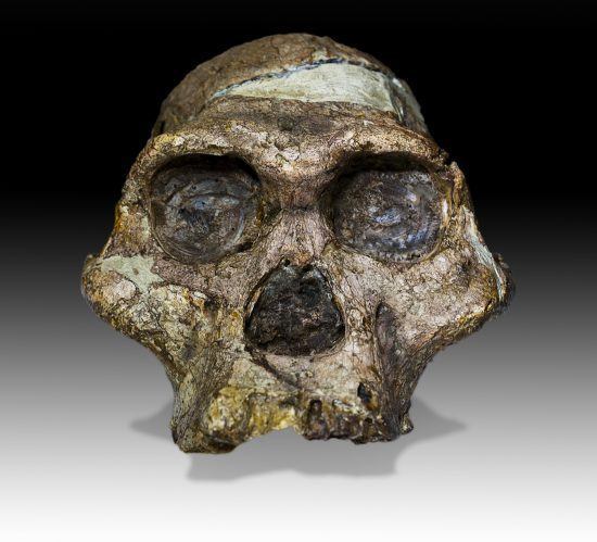 Sterkfontein Caves in South Africa: Australopithecus africanus Mrs.Ples