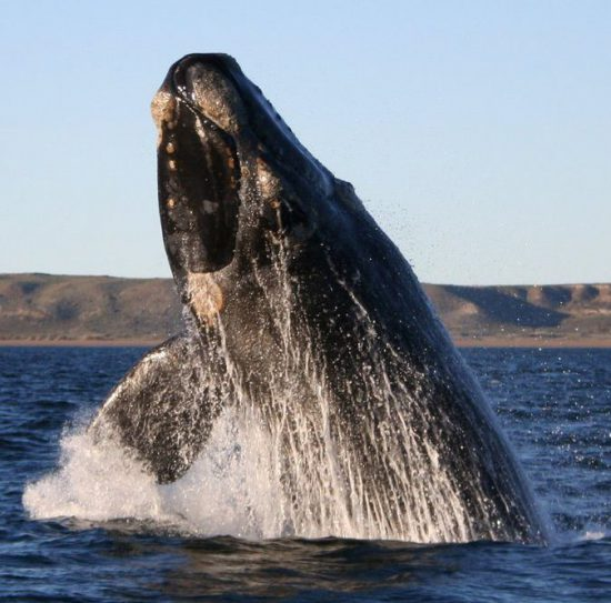 Visit South Africa's whale season