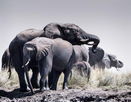 Elephantenfamilie