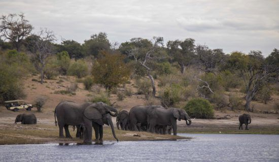 Travelling the Okavanga Delta by Moroko unveils a plethora of wildlife