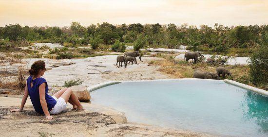 Hóspede se refresca enqunato observa elefantes no Londolozi Private Game Reserve