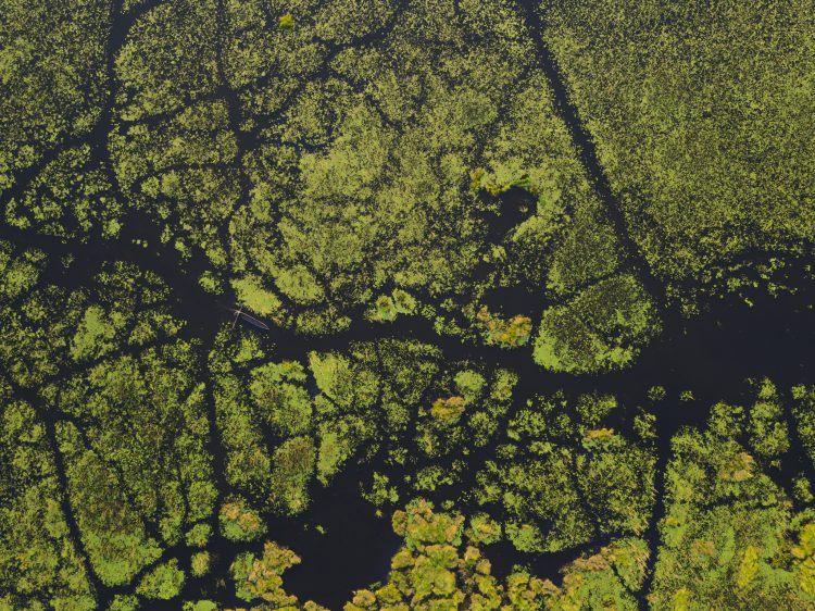 Vol en petit avion léger au dessus du Delta de l'Okavango