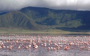 Flamingos in the Ngorongoro Crater lake