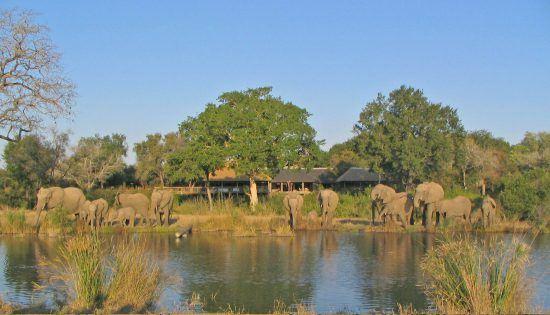 elephants at sabi sabi bush lodge