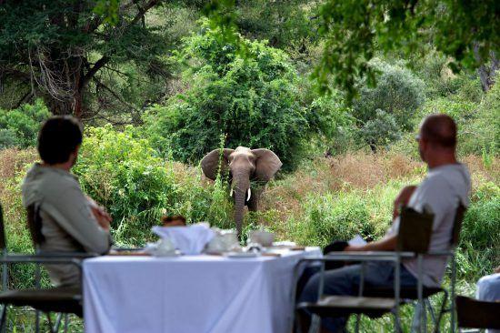Ein Elefant schaut beim Mittagessen von zwei Männern in der Singita Lebombo Lodge vorbei