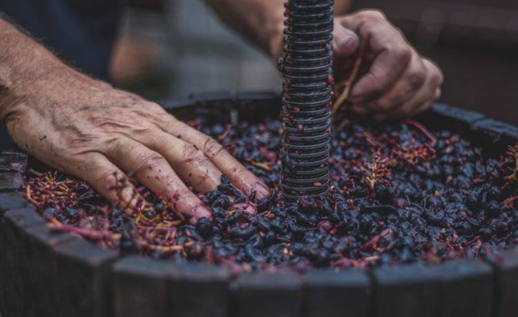Producción de vino de alta calidad