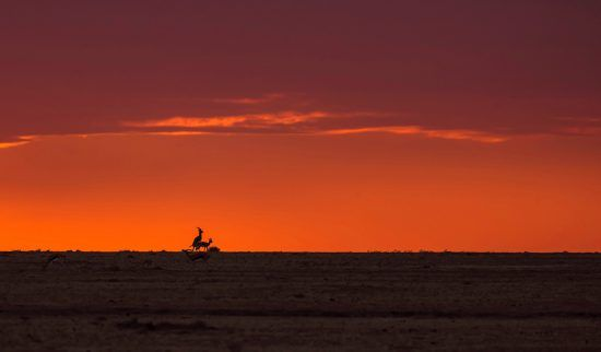 Sonnenuntergang Savanne