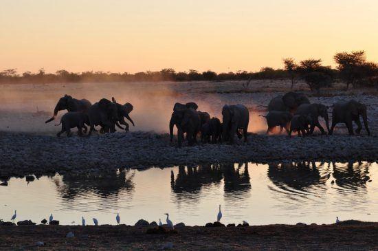 Elefanten bei Sonnenuntergang am Wasserloch