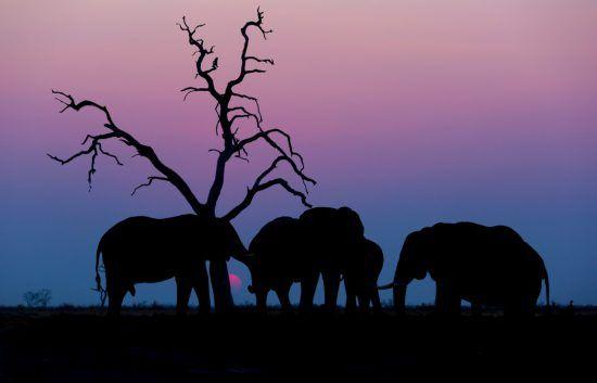 Elefanten bei Sonnenuntergang