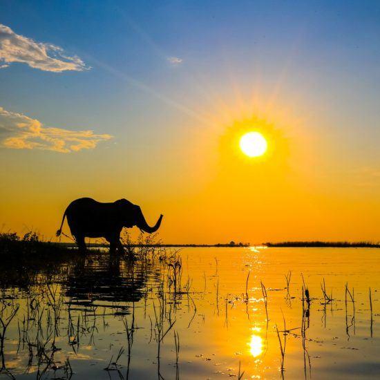 Elefant bei Sonnenuntergang