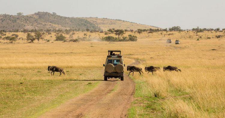 Safari entre ñus y más vida silvestre