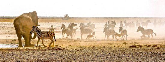 Elefanten und Zebras am Wasserloch