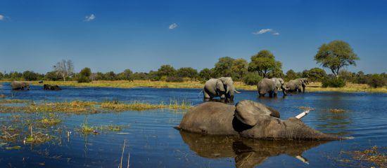 Elefanten am spielen
