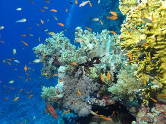 Bunte Fische schwimmen in einem Korallenriff hin und her