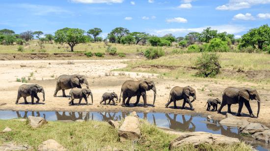 Elefantes, Tarangire