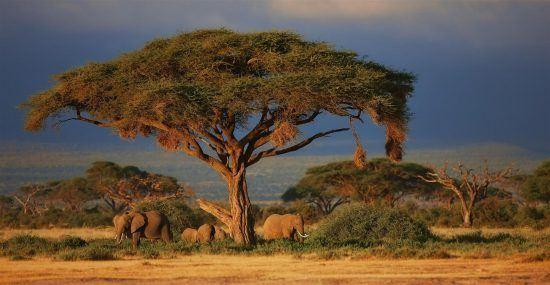 Eine Elefantenherde spielt unter einem Baum in Kenia