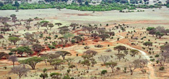 Bäume und Büsche der Savanne in Kenia aus der Vogelperspektive