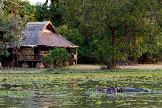 Hippopotame dans les eaux du Delta de l'Okavango, Botswana.