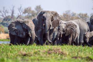 Les 500 éléphants de l'Addo Elephant Park sont à ne pas manquer lors d'un safari sur la Garden Route en Afrique du Sud.