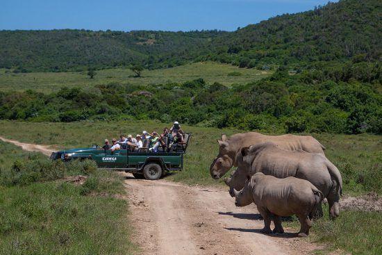 Empacar para un safari es tan emocionante como estar entre la vida salvaje