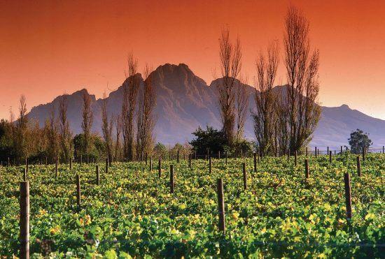 Die Weinberge von Franschhoek bei Sonnenuntergang