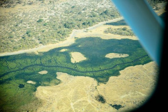Blick aus einem Kleinflugzeug auf die grüne Landschaft Botswanas