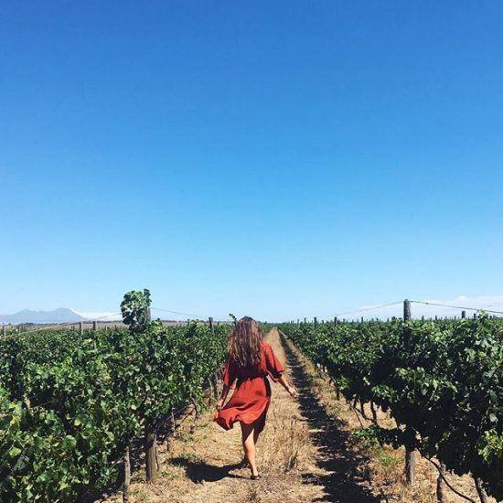 La Route des vins en Afrique du Sud   Stellenbosch