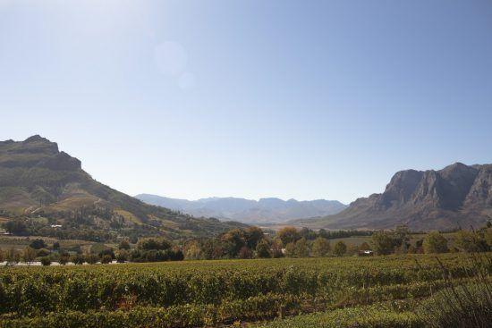 Die malerischen Weinberge von Stellenbosch im Kap-Weinland