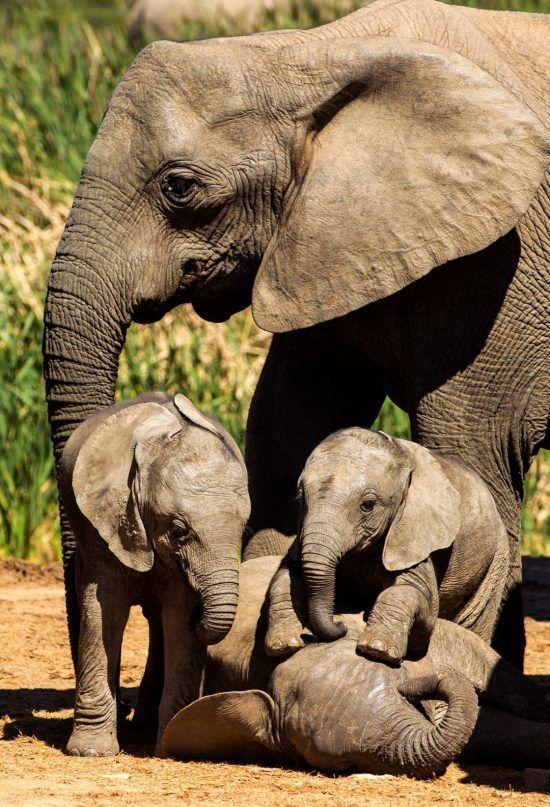Elefantenfamilie spielt