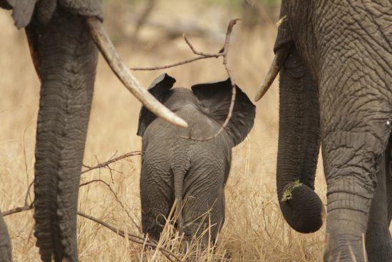 Elefantenfamilie spaziert davon
