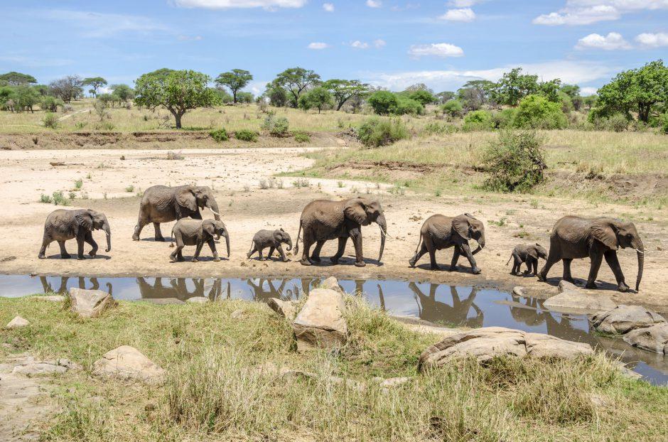 """Mitglieder der """"Big Five"""": Elefantenherde an einem Wasserloch"""