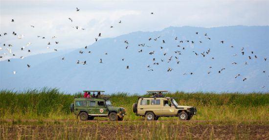 Safari im Geländefahrzeug