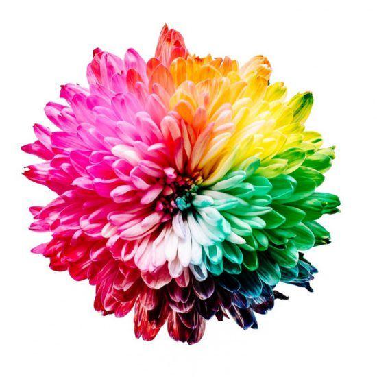 Regenbogen-Blume in Tansania