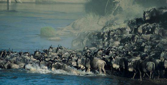 A Grande Migração no Serengeti