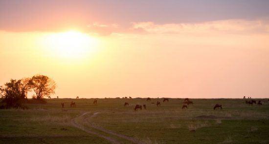 Sonnenuntergang und Tiere am Grasen