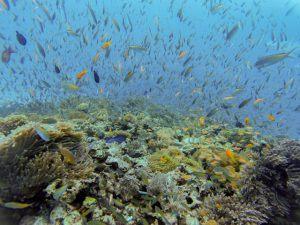 Ein bunter Fischschwarm an einem Korallenriff
