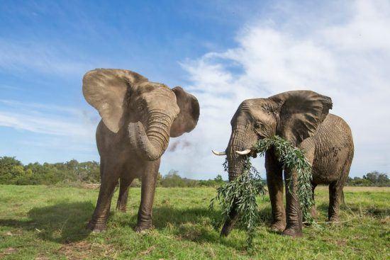 Elefantes em Addo, uma das áreas livres de malária da África
