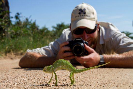Chamäleon wird von Ranger fotografiert