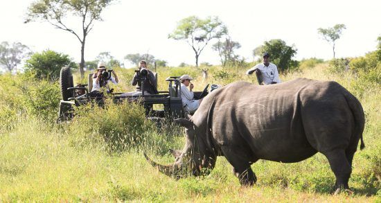 On a private reserve, travellers can off-road to see animals up close