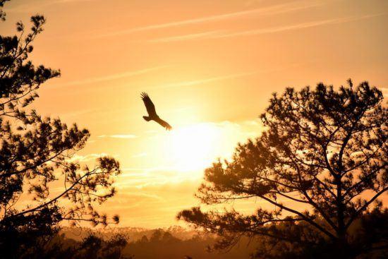 Vogel gleitet bei Dämmerung durch die Luft